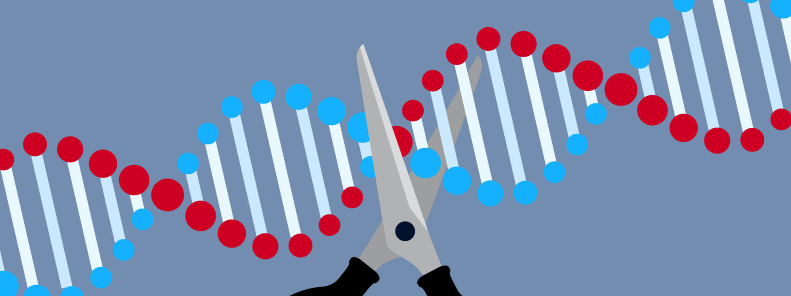 Crispr – gene editing